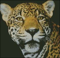 Jaguar Head