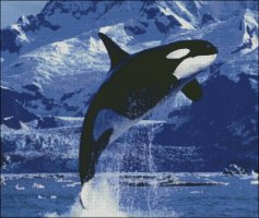 Killer Whale - Large