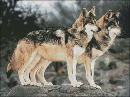 Mexican Wolves - Large