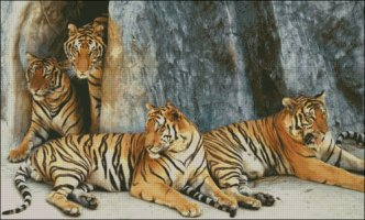 Tiger Family - Large