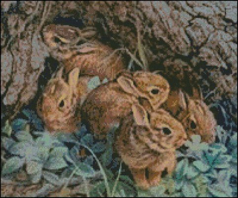 A herd of Rabbits - Click Image to Close