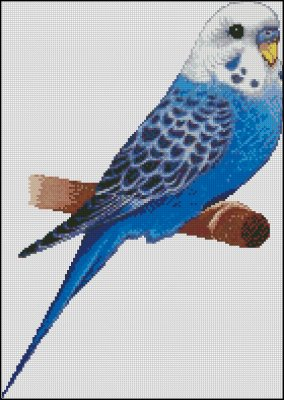 Blue Parakeet - Click Image to Close