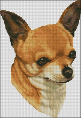 Chihuahua Head - Click Image to Close