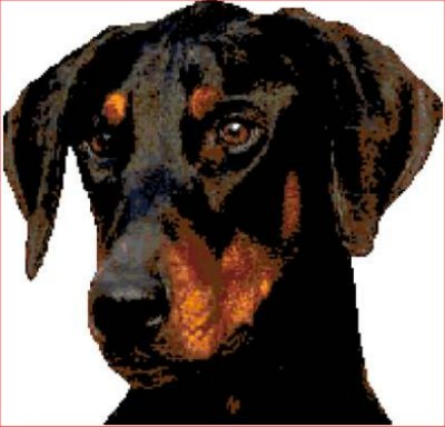 Doberman Head - Click Image to Close
